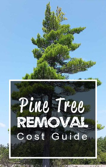 How much does it cost to remove a pine tree? - 2020 Blog ...