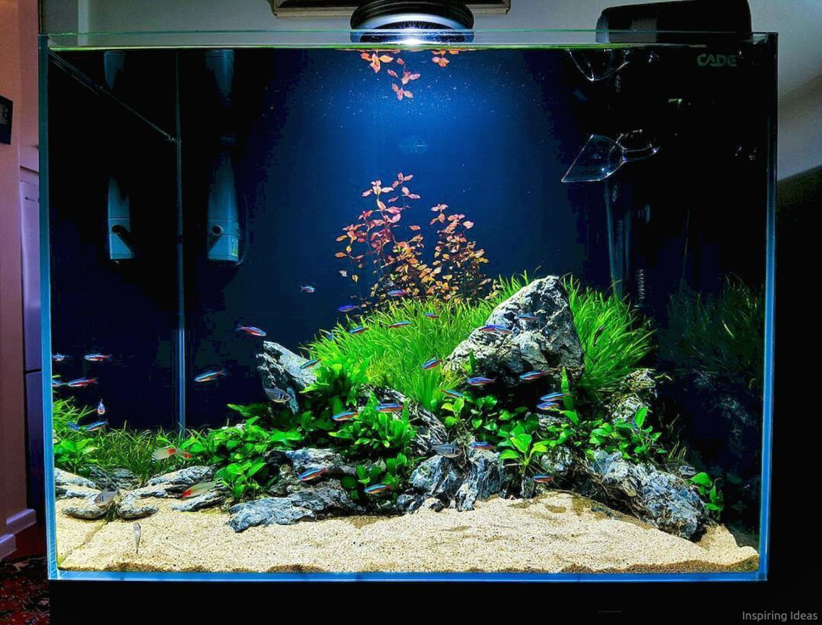 20 Aquascaping Ideas For Inspirations Aquariumtanksideas