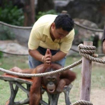 Stop monkey-n around...get your spine checked! #spine #health #chiropractor #natural #monkey #massage