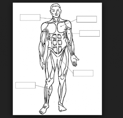 Imagenes Del Sistema Muscular Humano Pra Colorear Human Body Systems Science And Nature Human Anatomy And Physiology