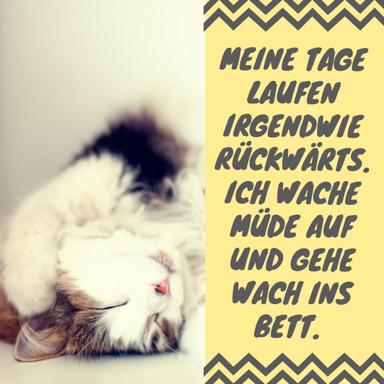 Whatsapp Status Spruche Beruhmte Und Witzige Zitate Connect