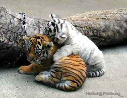 The True Meaning Of Friendship Cute Baby Animals Cute Animals Animals Wild