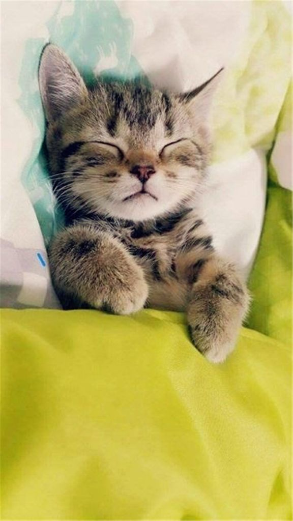 12 Incredible Reasons To Have A Cat Kittens Cutest Sleeping