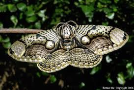 ghost moth - Google Search