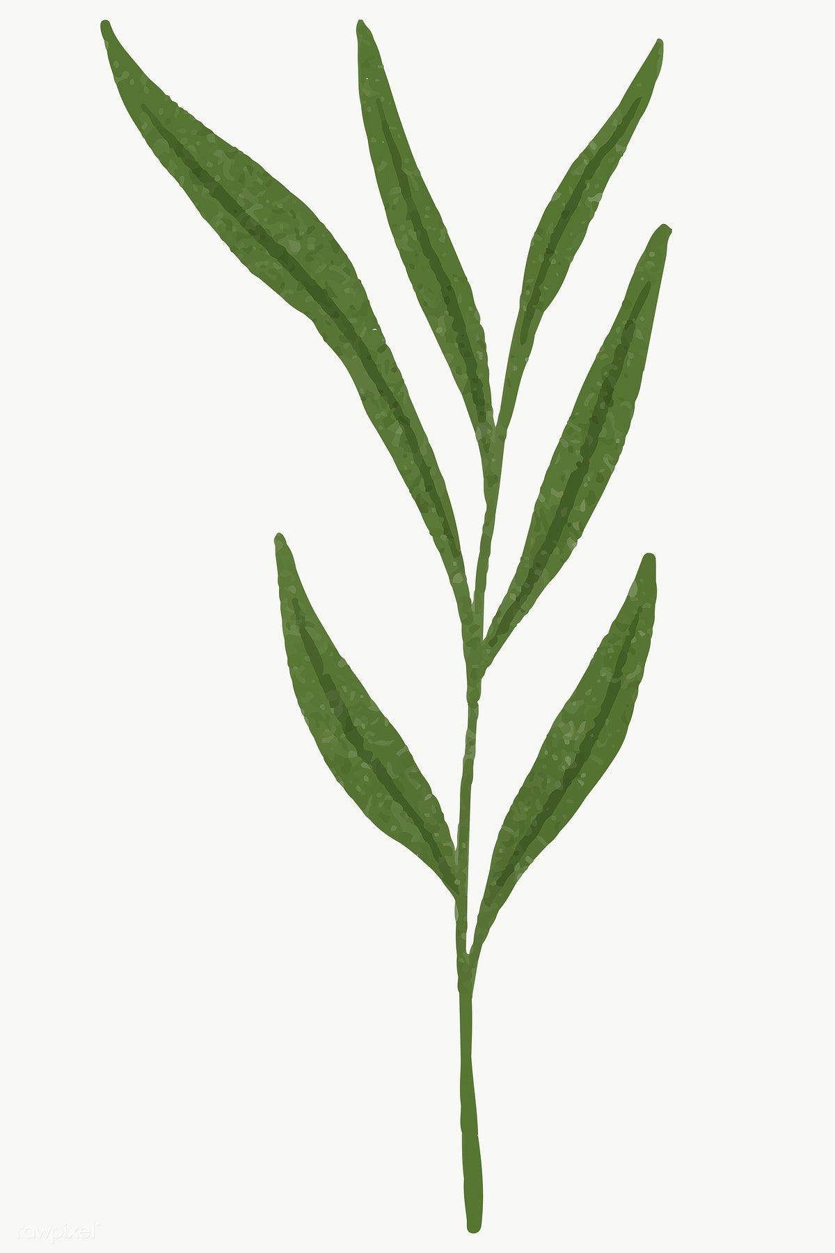 Branch With Green Leaves Design Element Transparent Png Free Image By Rawpixel Com Aum Leaf Illustration Leaf Design Leaf Drawing