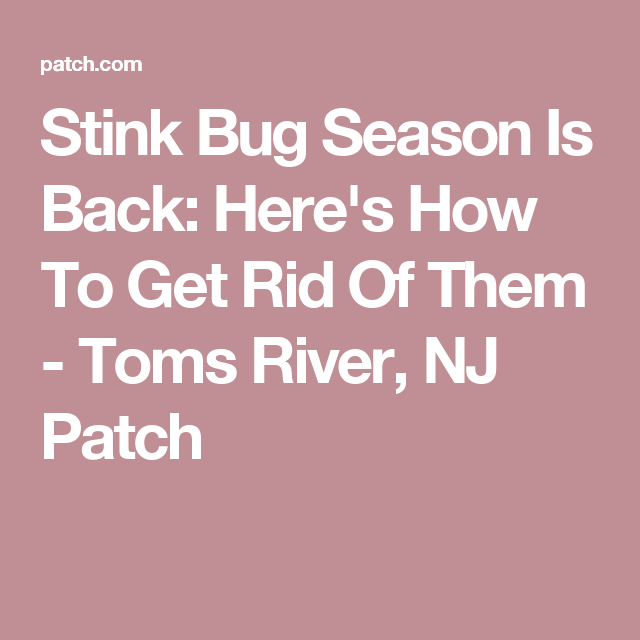Stink Bug Season Is Back Here S How To Get Rid Of Them Stink Bugs Stink Bugs