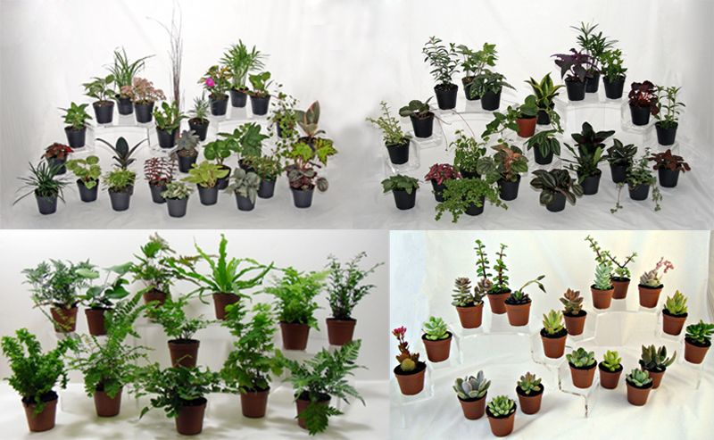 Wholesale Terrarium And Fairy Garden Plants At Batson's