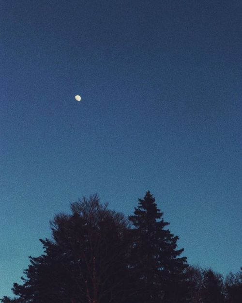 cladelcroix:Moon & trees  Col de la Faucille France ...