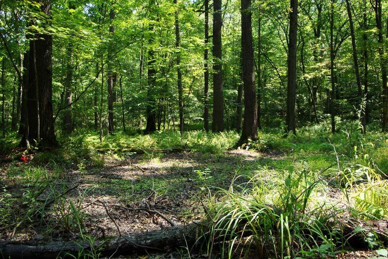 Pennsylvania forest habitat - Google Search