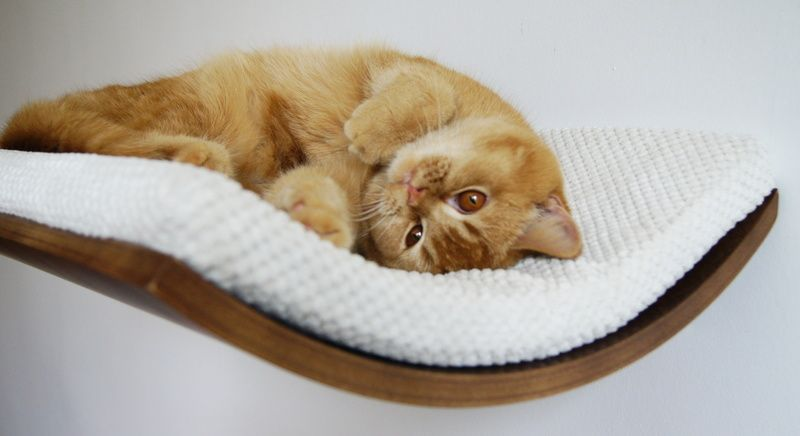 Katze regal chill von cosy dozy auf lm 7 random - Ovale wandregale ...