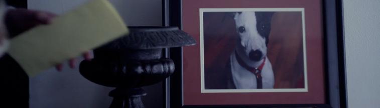 Dog Food es el cortometraje de la semana, escrito y dirigido por Brian Crano. Un carnicero pierde a su amigo inseparable, un lindo perro, a partir de ese momento su vida cambia.  Participan como protagonistas Cory Michael Smith, Amanda Seyfried y David Craig. El filme participó en el 13 Festival de Filmes Internacionales y ganó como mejor horror/thriller en el Comic Con