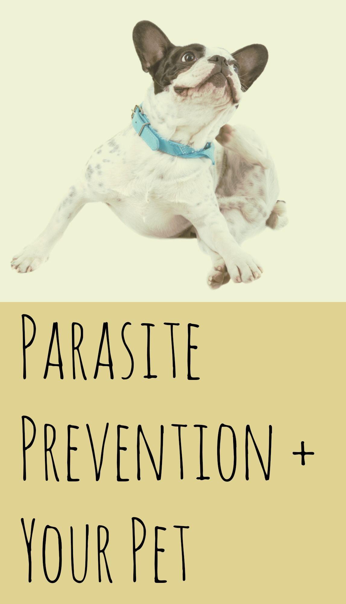 Parasite Prevention and Your Pet fleas pets pethealth