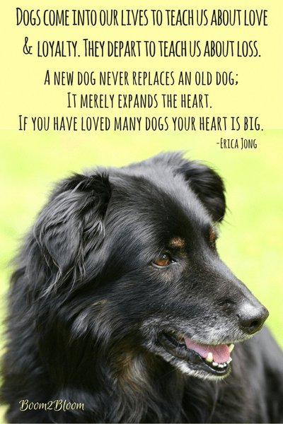 Dogs Come Into Our Lives To Teach Us About Love Loyalty They