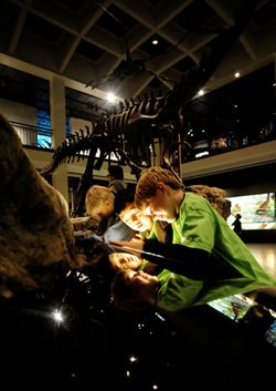 the Houston Museum of Natural Science - PALEONTOLOGY EXHIBIT contains more than 450 fossils/fossil replicas (Dinosaur Unit)