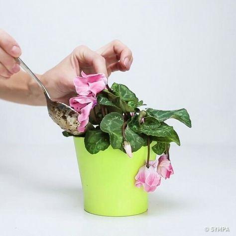 Conseils Pour Rescuciter Les Plantes Astuce Jardin Engrais
