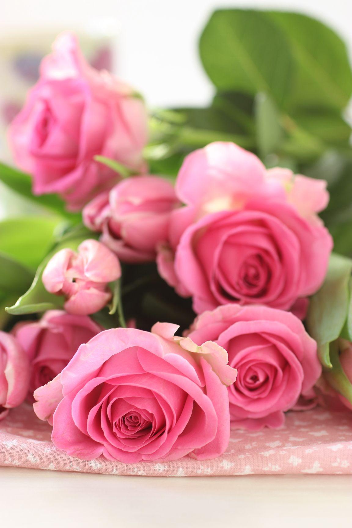 Roses Spring Pink Rose Flower Wallpaper Amazing Flowers Beautiful Roses Fantastic beautiful flower wallpaper