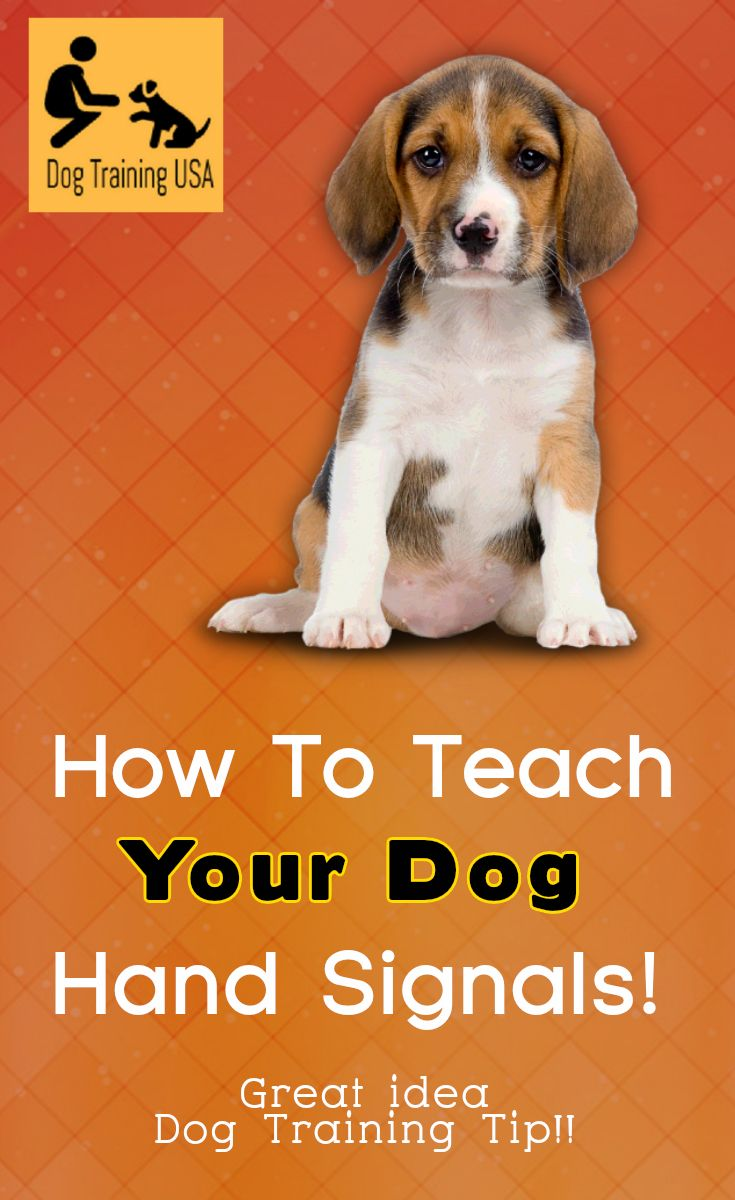 Step By Step Instructions On How To Teach Your Dog Hand Signals