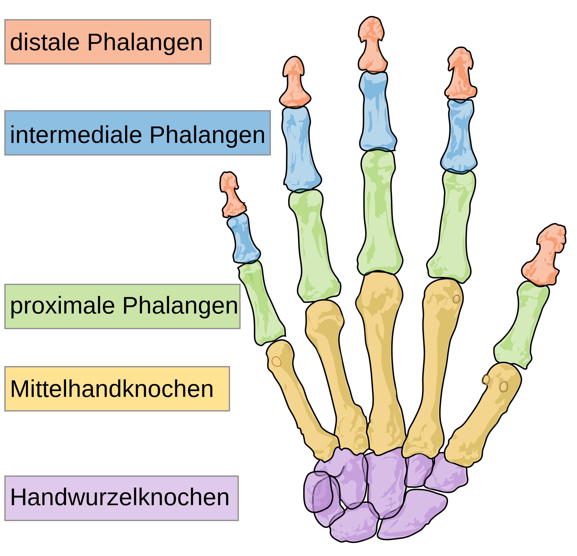 Bildergebnis für knochen der hand | Trigger point | Pinterest