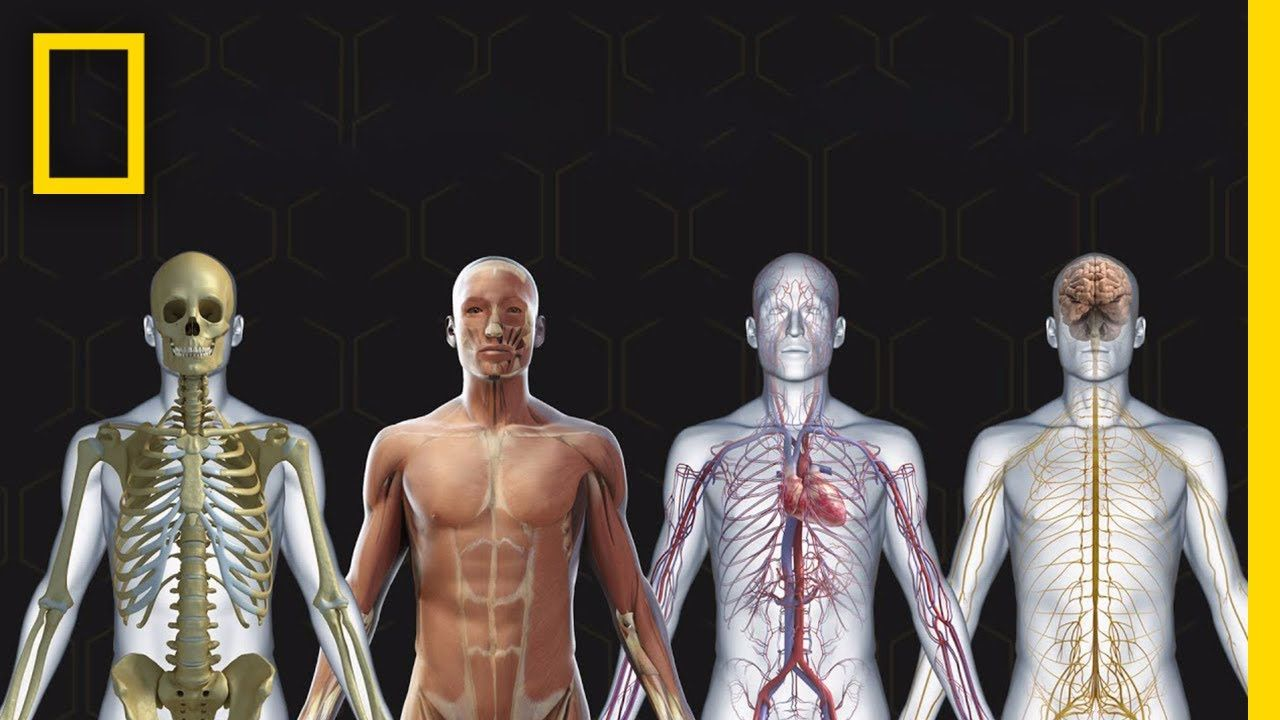 Resultado de imagen de cuerpo humano national geographic