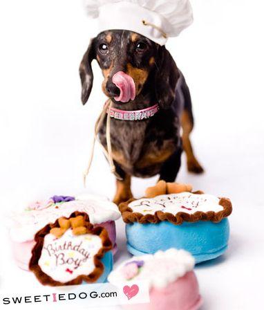 jouet anniversaire chien