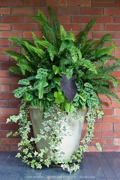 Best Foliage Plants For Containers Plants Porch Flowers Front