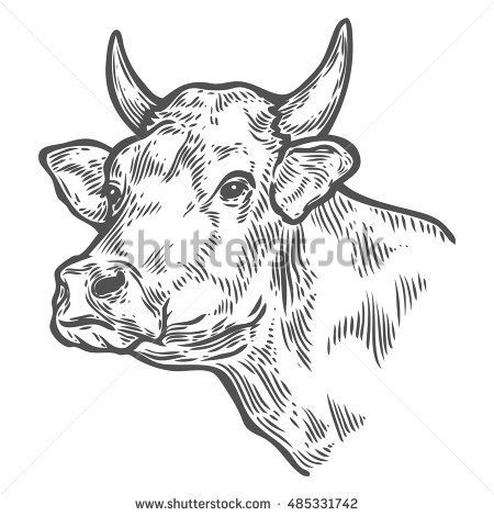 Cows Head Hand Drawn Sketch In A Graphic Style Vintage Vector