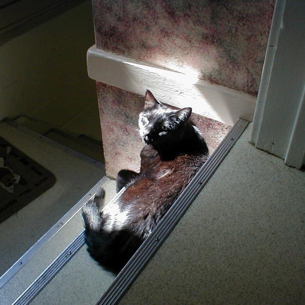 Pet Prayer Websites Positive Energy For Sick Pets Pets