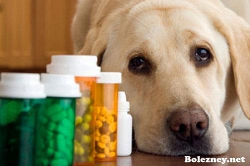 Лучшие препараты от глистов для собак и щенков | Щенки ...