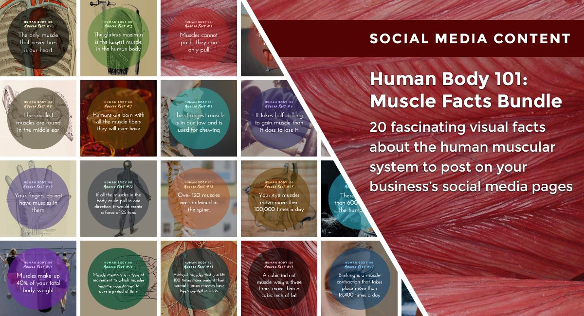 share these visual facts about the human muscular system on your, Muscles