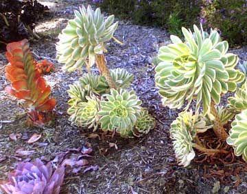 Xeriscape | Xeriscape plants, Desert landscaping