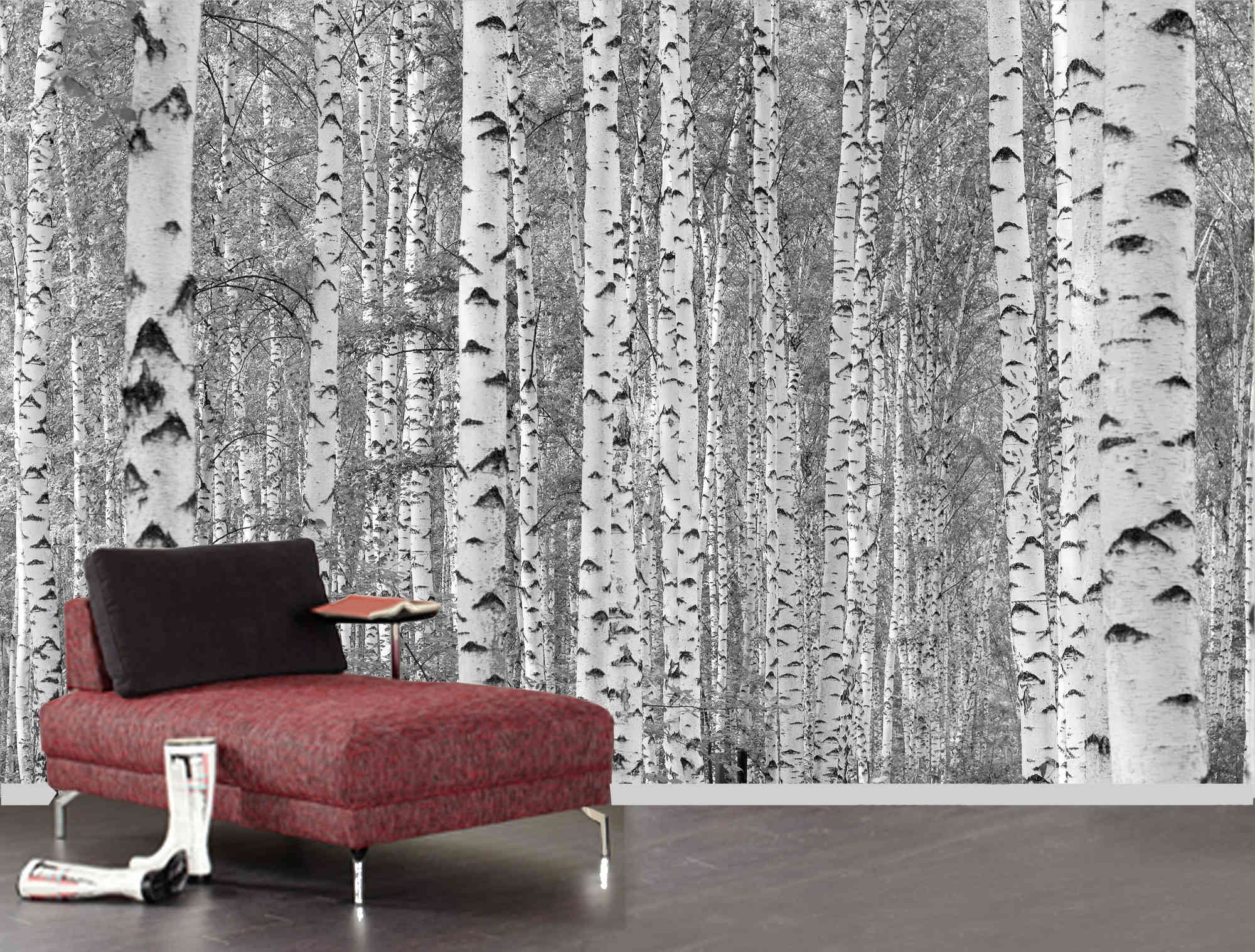 Wall Mural Photo of Birch Trees in Black and White