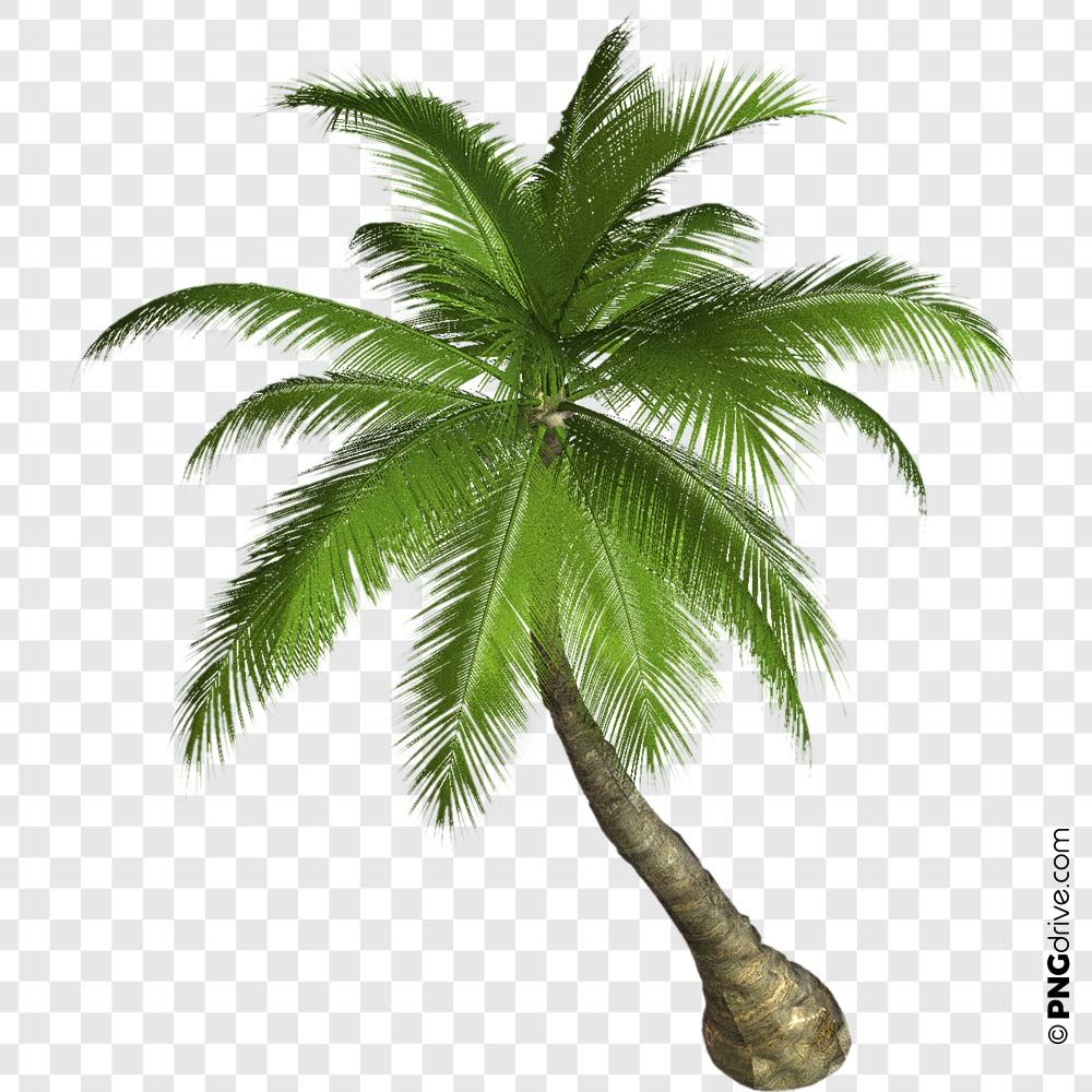 Pin By Png Drive On Trees Png Image Palm Trees Tree Palm