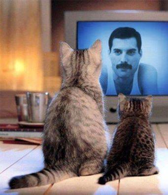 Freddie's cats watching him!