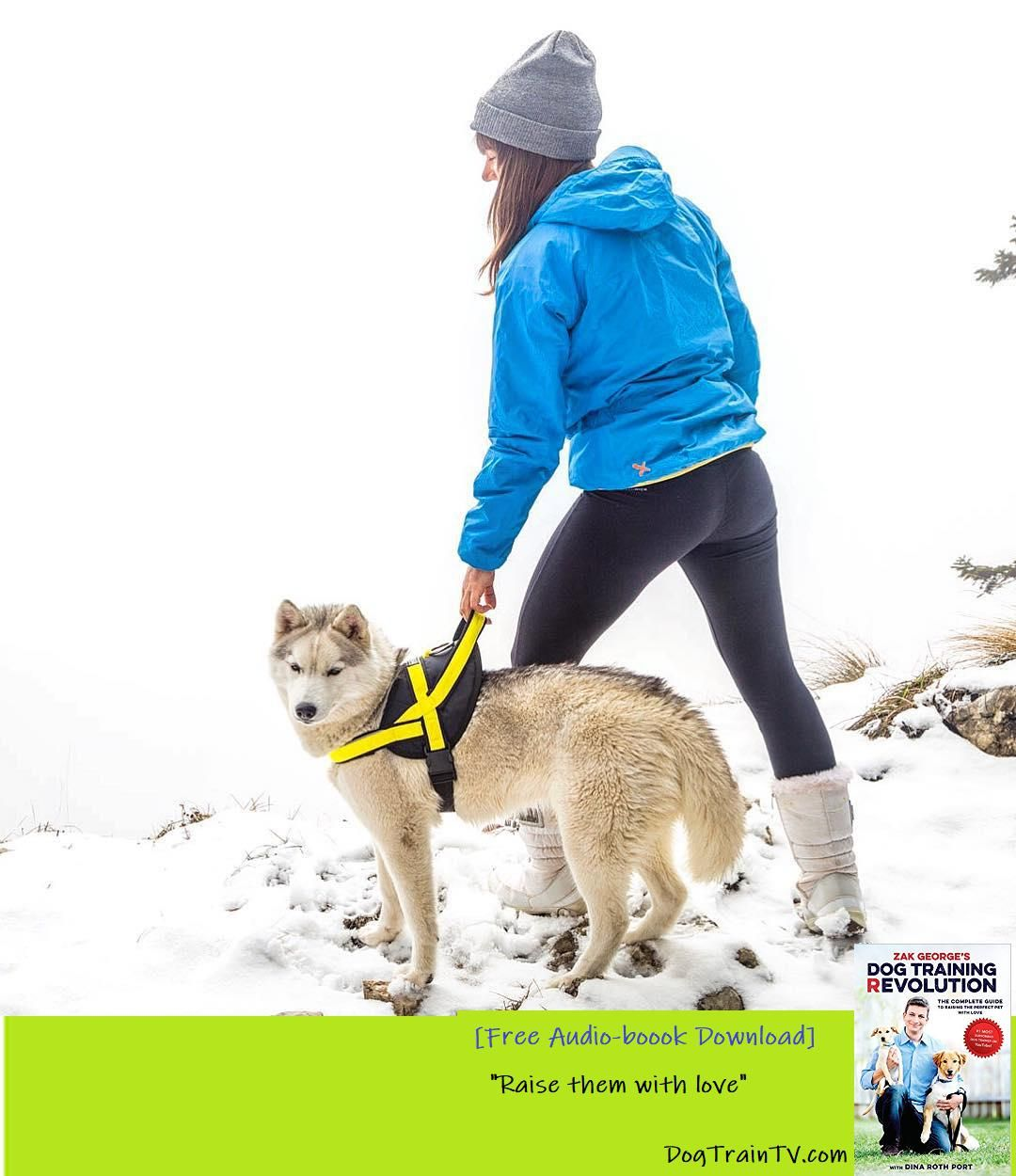 Hello Snow Get Ready With The Right Gear For Your Pup Neewa