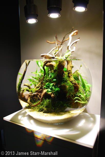 2013 AGA Aquascaping Contest - Entry #76 | Water terrarium ...