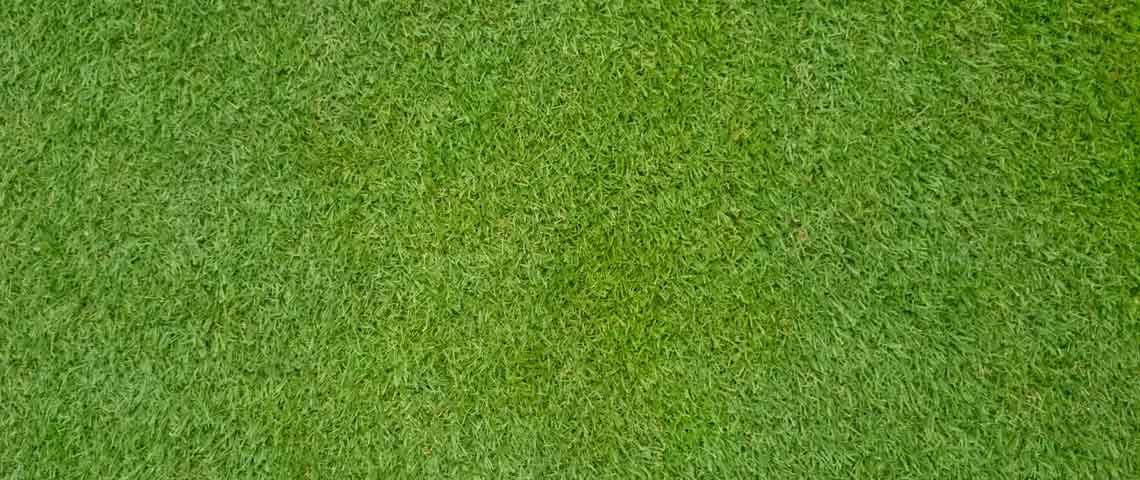 All you need to know about bermudagrass grass pattern