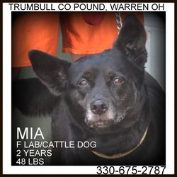 Adopt Mia Prison Training Graduate On Animal Welfare League Black Labrador Retriever Labrador Retriever Dog