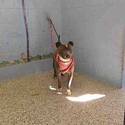 Available Pets At Saving Shelter Pets Inland Empire In San