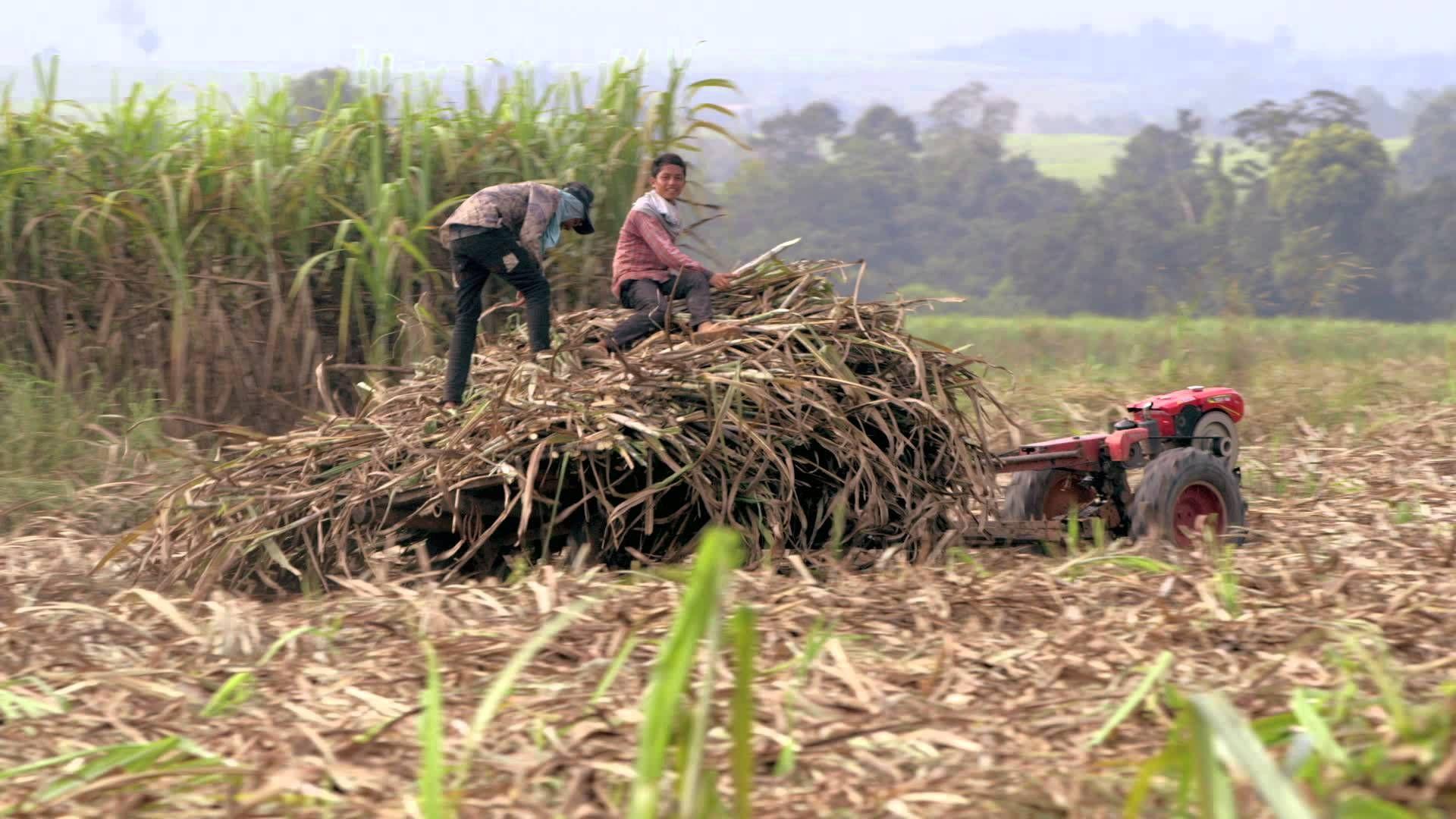 [RIDM] Sans Terre, c'est la faim. Témoignages d'accaparement de terres dans un voyage bucolique au Mali, Cambodge et Ouganda. Lundi 18 novembre 17h30 avec sous-titres en anglais.  http://www.ridm.qc.ca/fr/programmation/films/527/sans-terre-cest-la-faim
