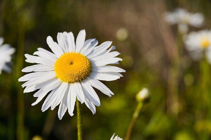 100,000+ Free Flower Garden & Garden Images - Pixabay in