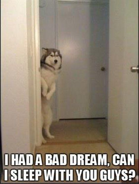 I had a bad dream, can I sleep with you guys?  #dogs