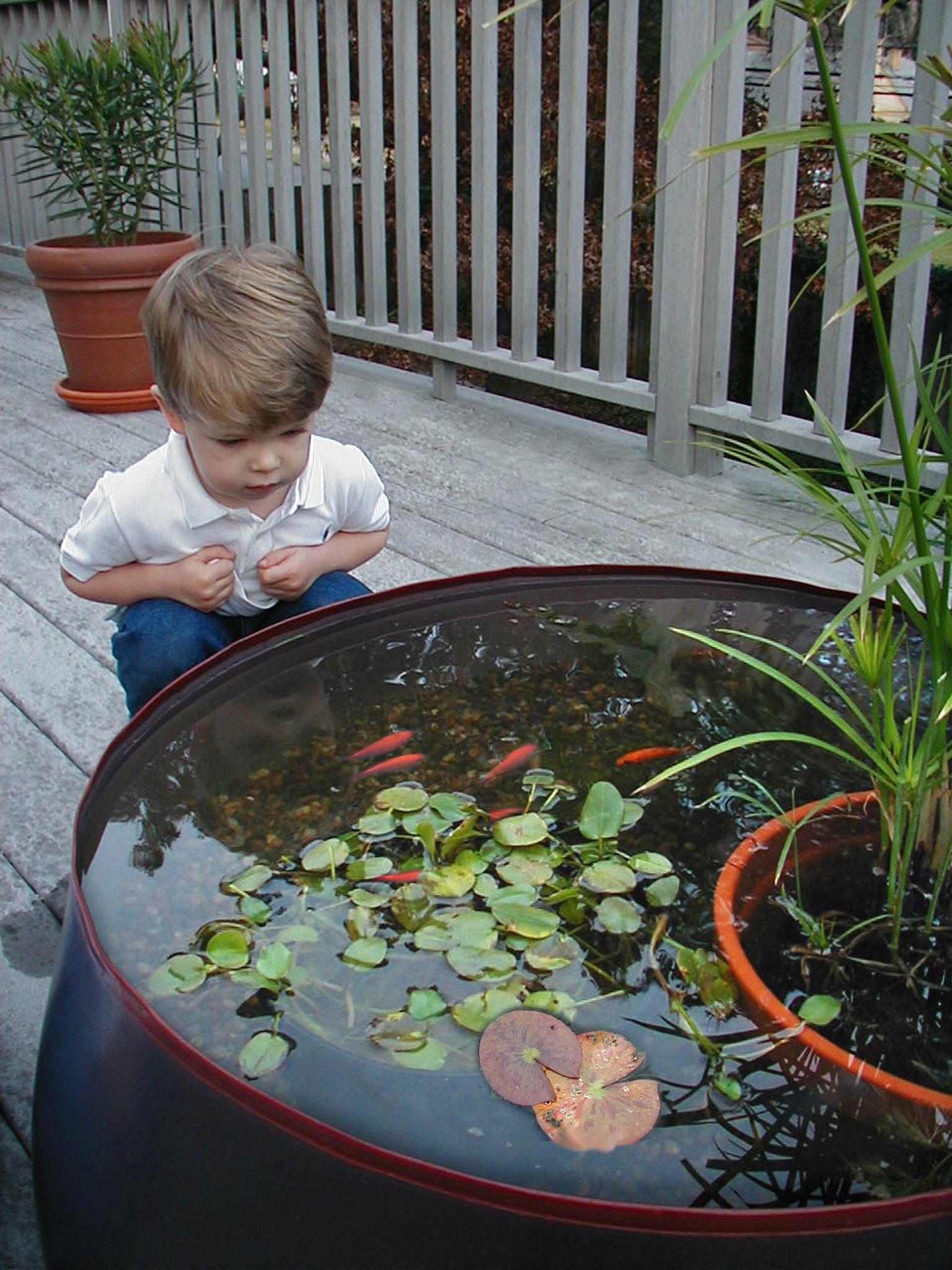 Garden Water Feature - Pop Pond. Aquarium