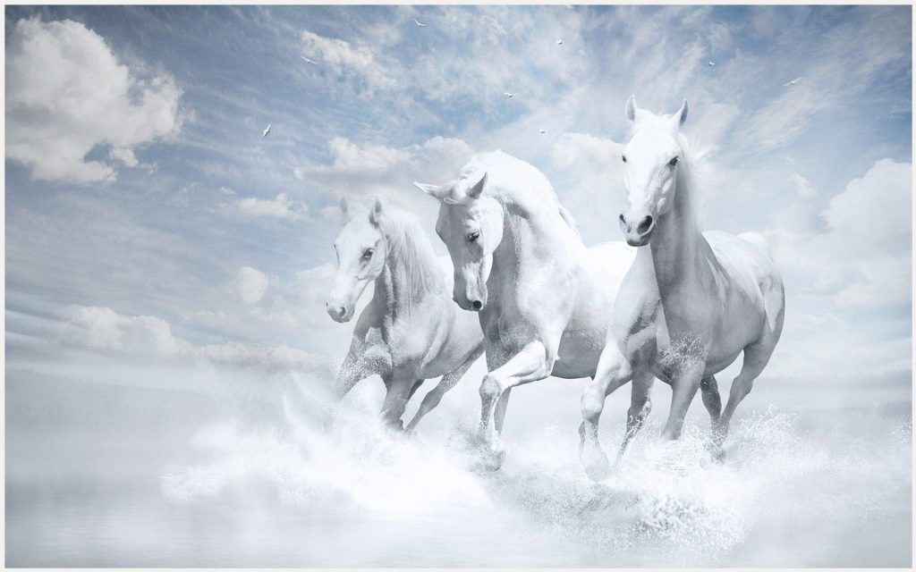 Running Horses Wallpaper Running Horse Wallpaper Border Running Horse Wallpaper For Android Running Horse Wallpaper For Horse Wallpaper Horses White Horses