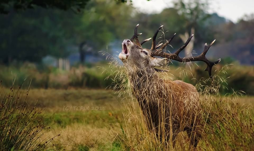 Call of the Wild by Tim Clifton
