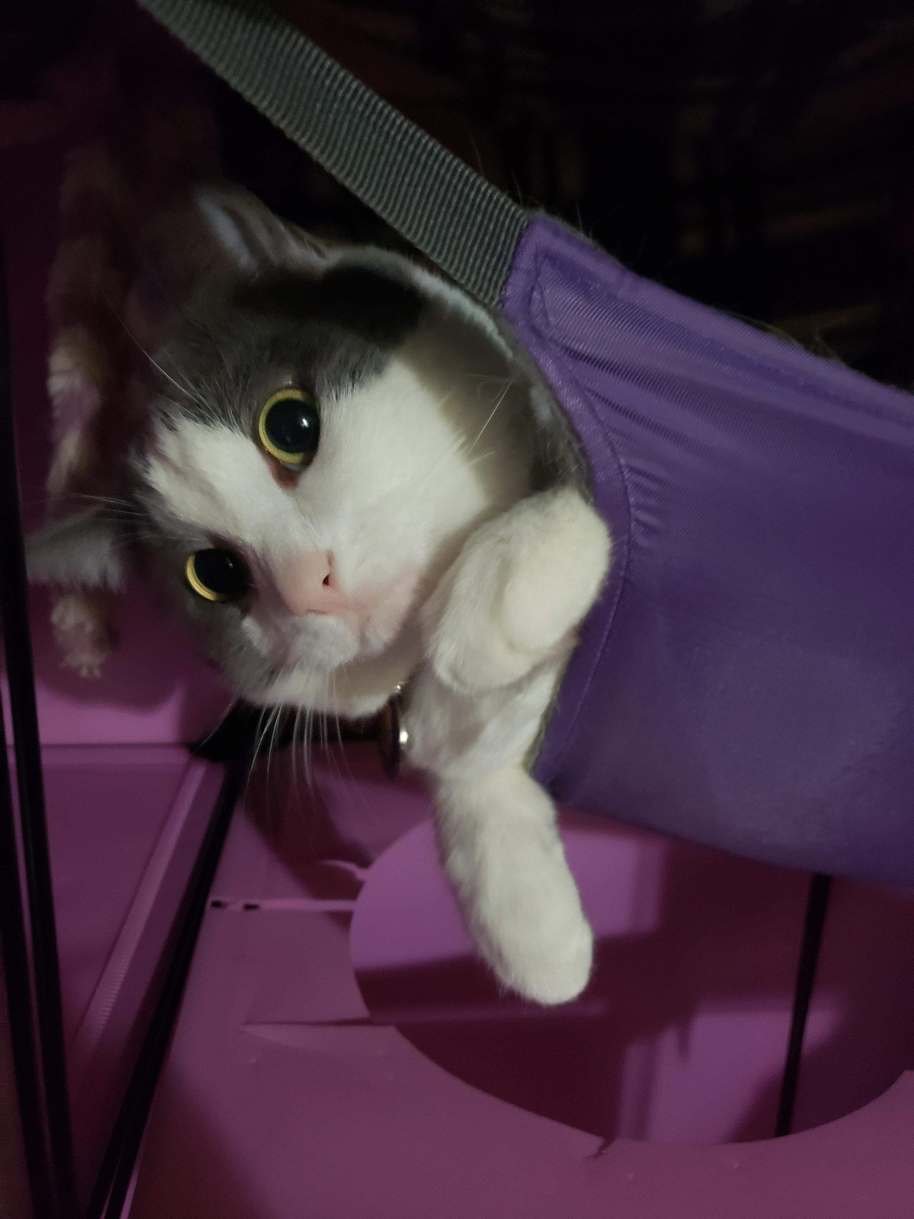 Purrito Sticky Paws In Her Hammock Https Ift Tt 3eivdjv In 2020 Cutest Cats Ever Cats Kittens Cutest