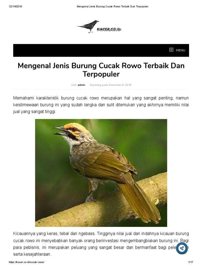 Saya Sedang Membaca Mengenal Jenis Burung Cucak Rowo Terbaik Dan Terpopuler Di Scribd Burung Jenis Populer