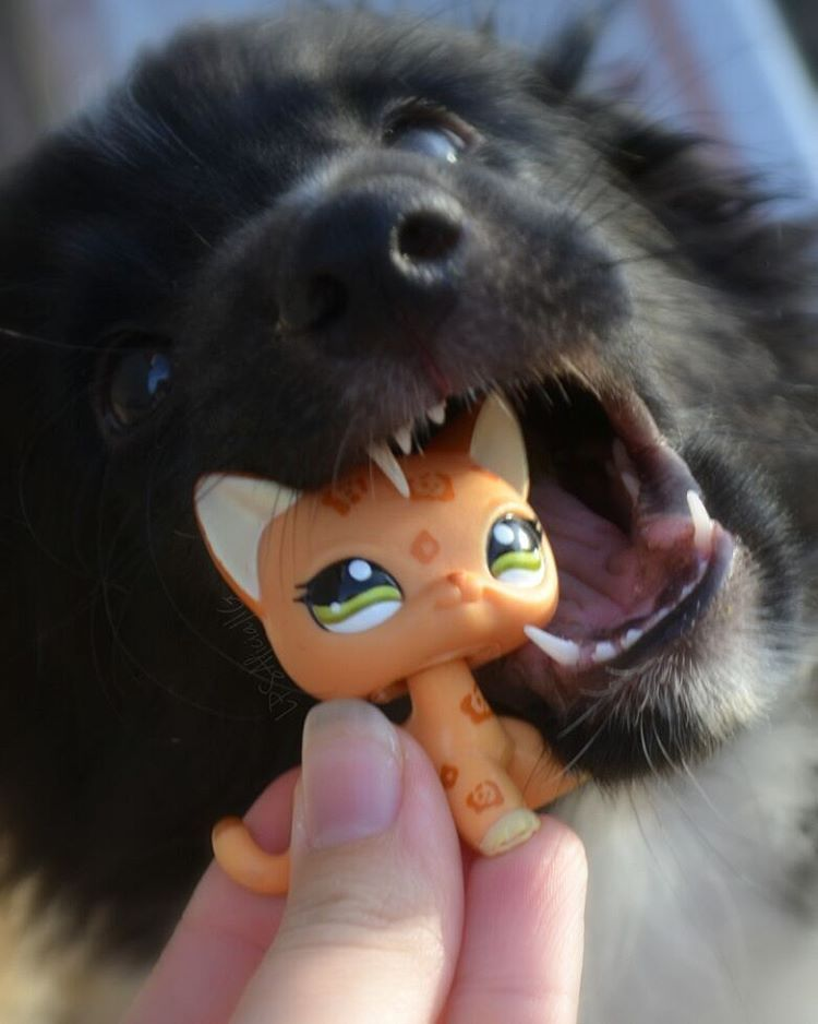 Lps Kitty And Dog Lps Pets Lps Littlest Pet Shop Lps Popular