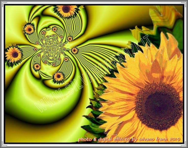SUNFLOWERS AND FRACTALS by phõtos_gráphein Silvano Franzi  on 500px