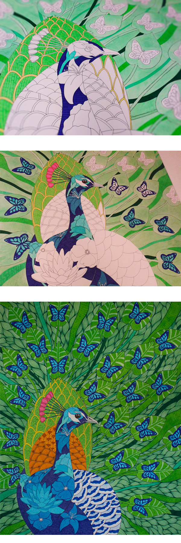 Peacock and Butterflies WIP shots. Hand drawn pen and ink over watercolour on A0 board.