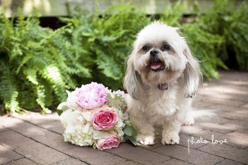 Our Wedding Bridesmaids Dresses Wedding Pets Dog Wedding Romantic Garden Wedding